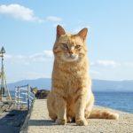 猫好き税理士が考える ペット保険は必要か?